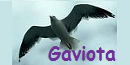 The Demolisher Gaviota