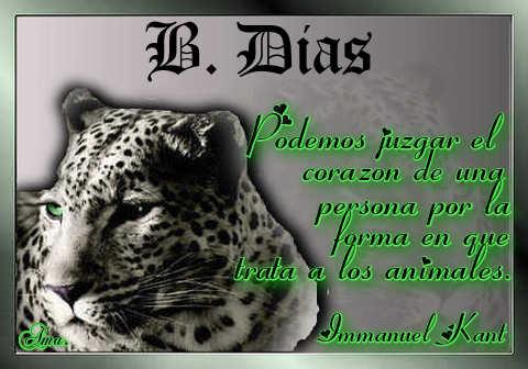 Tigre con Frase Dias