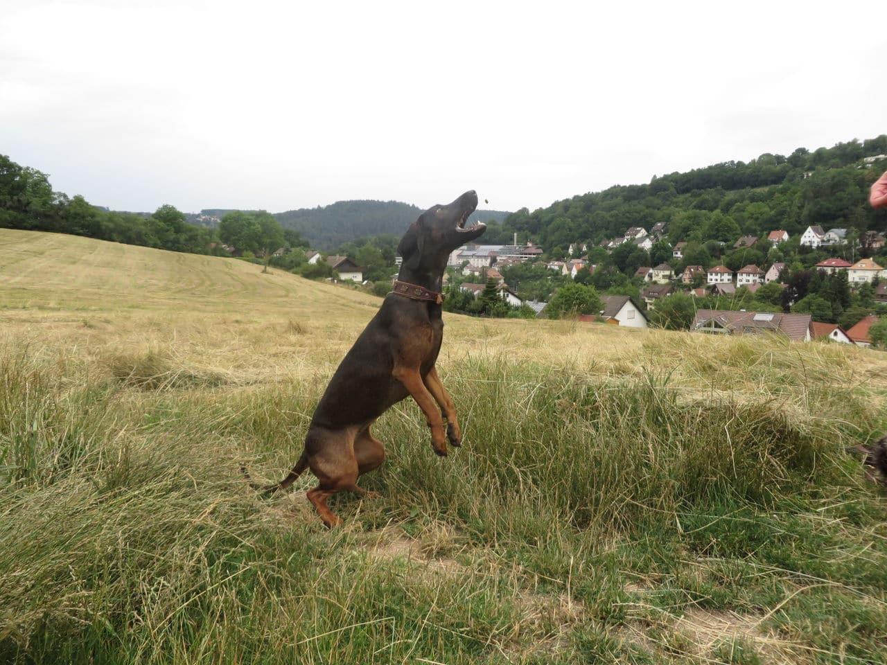 meine Hunde  IMG_0917