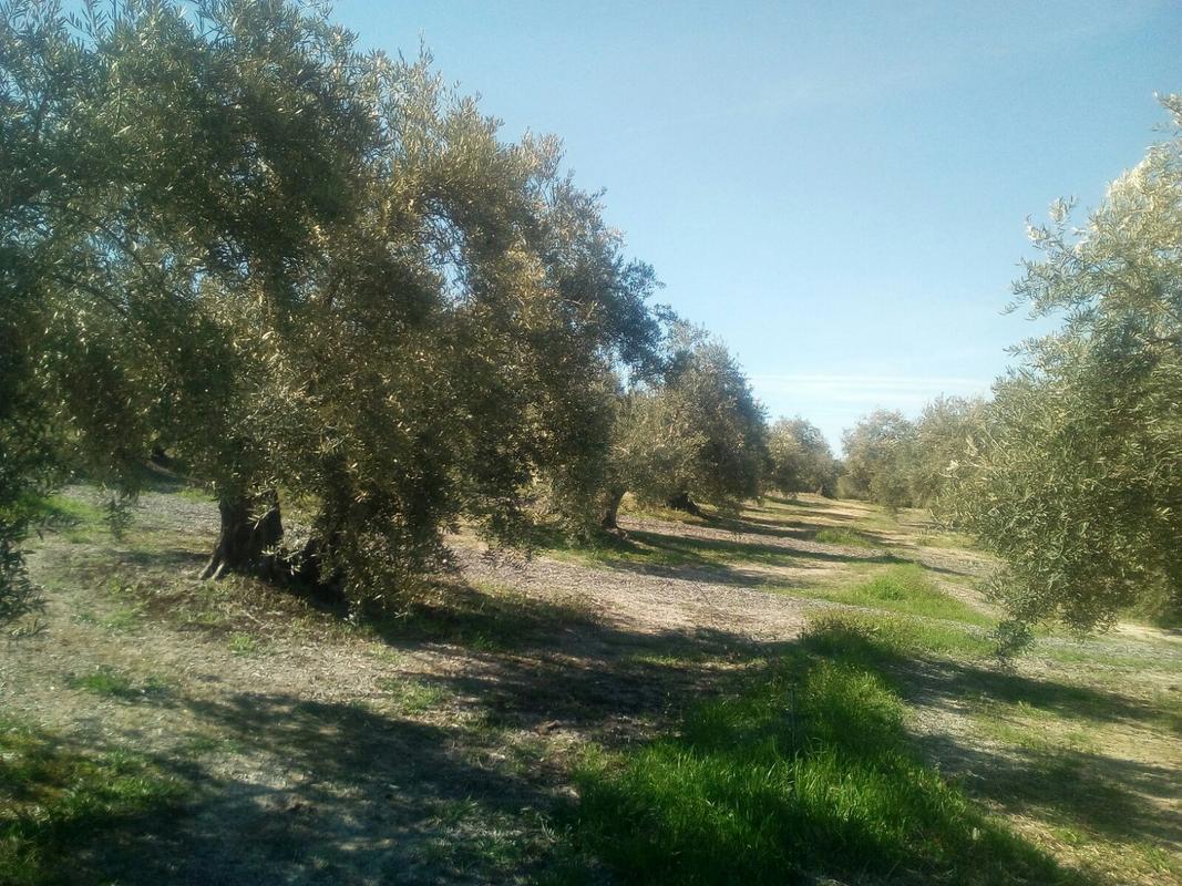 Manejo de suelos y uso de herbicidas - Página 2 Image