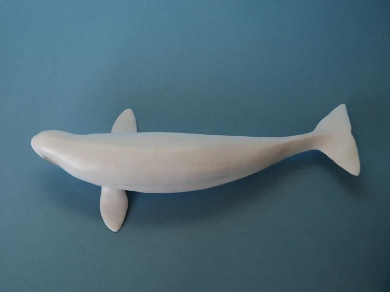 Battat Terra Beluga Whale: walkaround and comparison with Safari Ltd IMG_6733ed