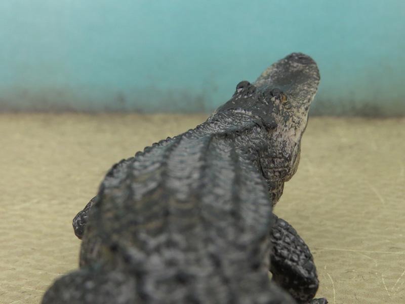 Mojö Alligator- walkaround/comparison by A.R.Garcia IMG_5910ed
