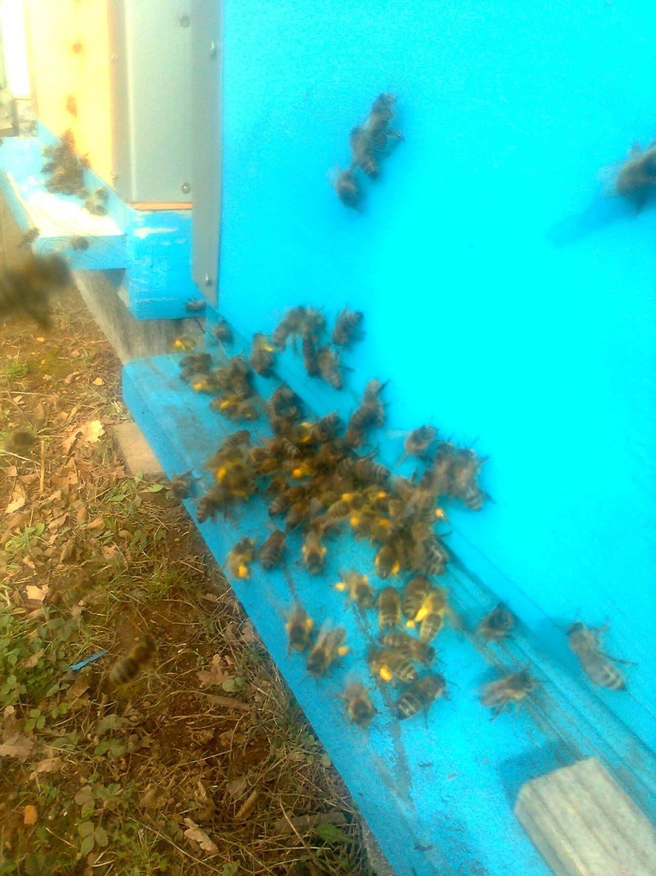 Pčelarstvo     - Page 4 Fotografija0368