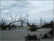 Hunting Island State Park, Beaufort, SC DSCF0711