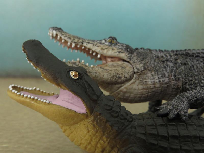 Mojö Alligator- walkaround/comparison by A.R.Garcia IMG_5921ed
