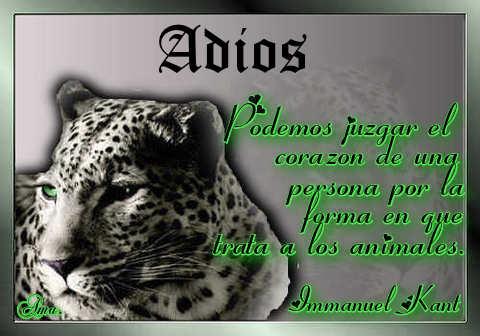 Tigre con Frase Adios