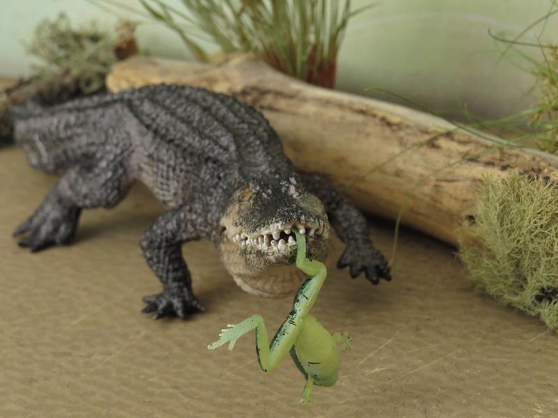 Mojö Alligator- walkaround/comparison by A.R.Garcia IMG_5943ed