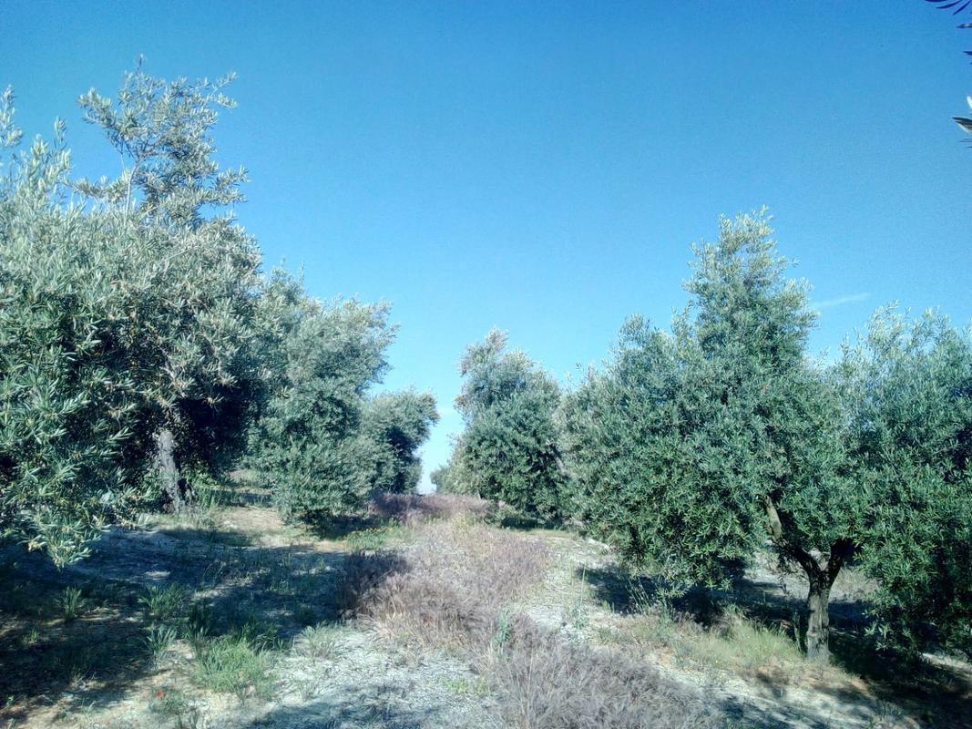 cosecha 2018-19 - Página 3 Image