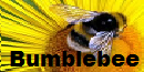 68th Amateur Series Division 8 Bumblebee