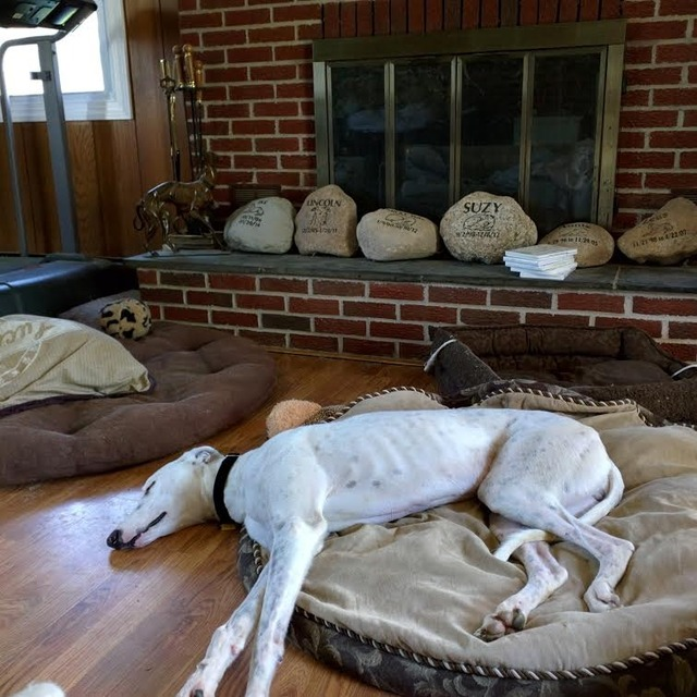 Our greys  Tired