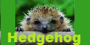 It Came In The Night Hedgehog