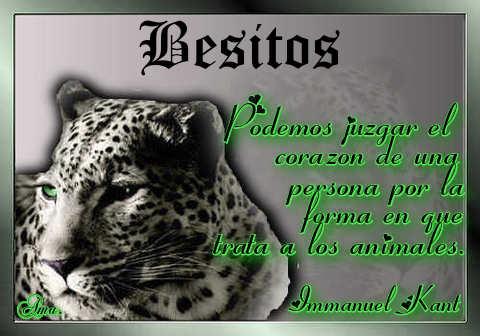 Tigre con Frase Besitos