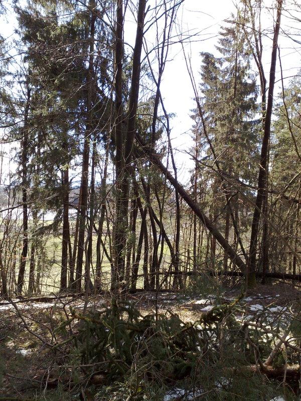 Izrada ogrijevnog drva 14022014714
