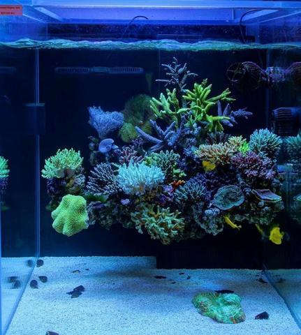Idées de décors  Floating_corals