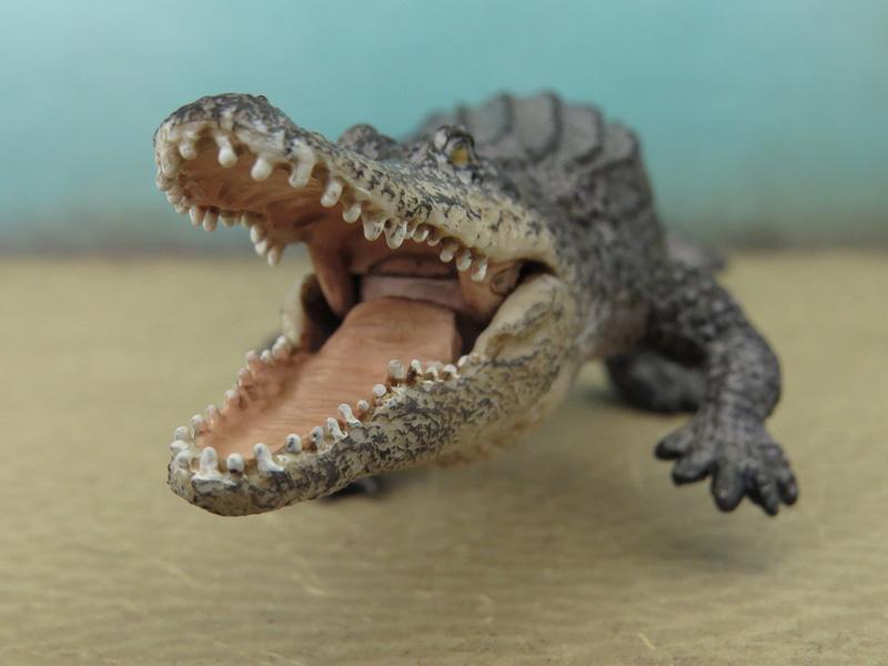Mojö Alligator- walkaround/comparison by A.R.Garcia IMG_5907ed