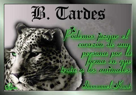 Tigre con Frase Tardes