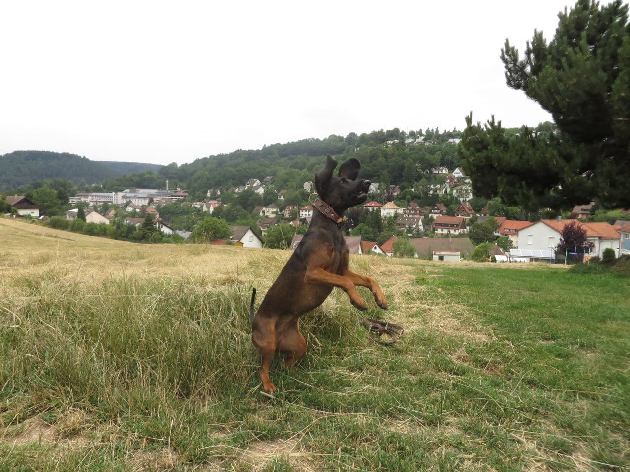 meine Hunde  IMG_0918
