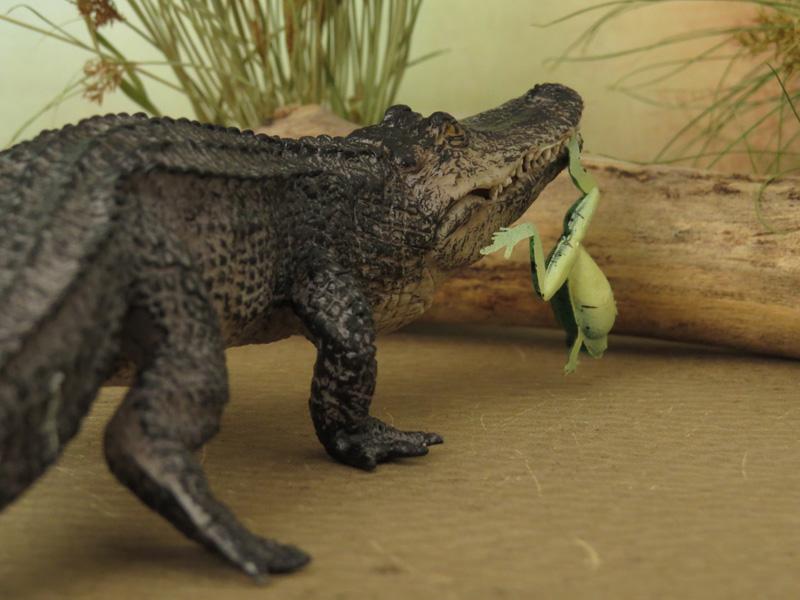 Mojö Alligator- walkaround/comparison by A.R.Garcia IMG_5945ed