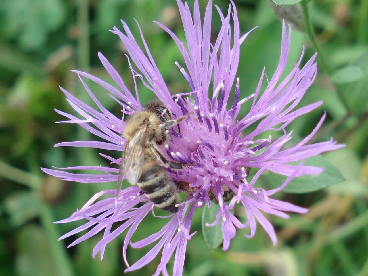 Pčelarstvo     - Page 3 DSC09152