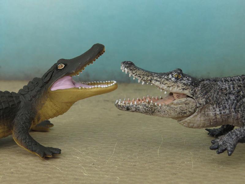 Mojö Alligator- walkaround/comparison by A.R.Garcia IMG_5917ed