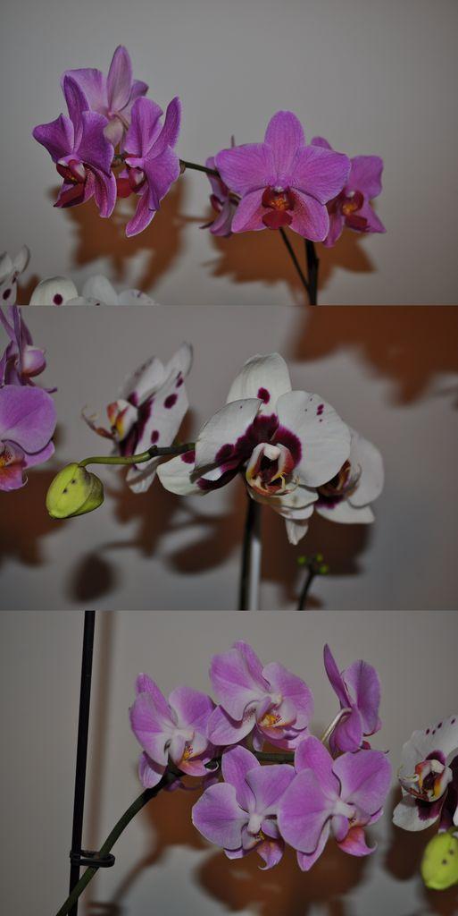 Flori si gradini - Pagina 31 Clipboard