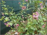 Léto na zahradě P5261109