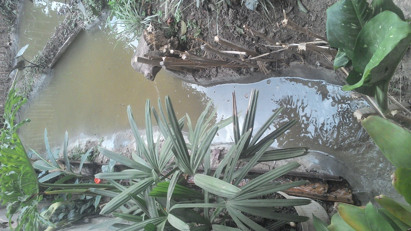 Construindo meu laguinho natural, me diga oque por nele. IMG_20140522_161930_852