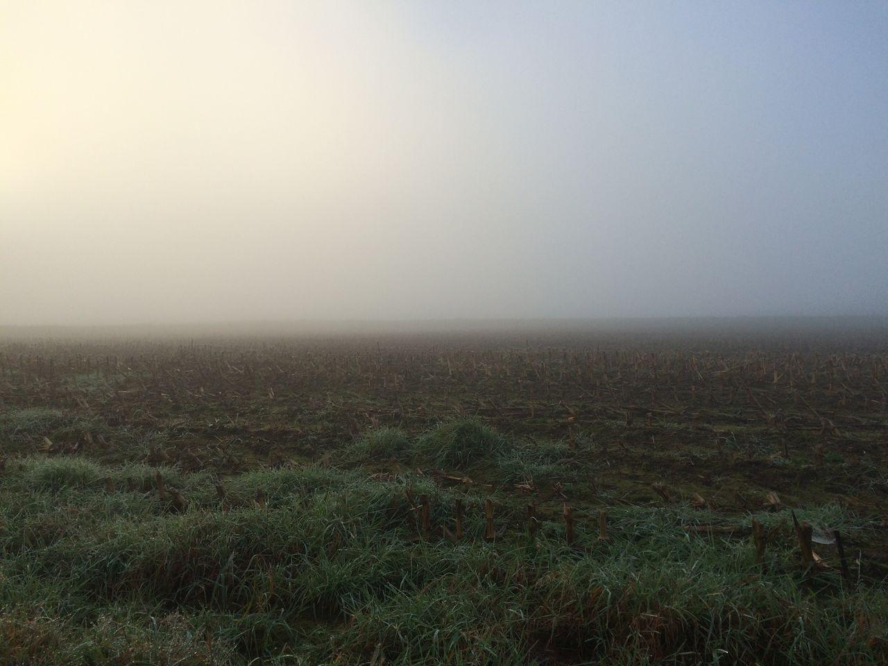 ein Herbstmorgen IMG_3282