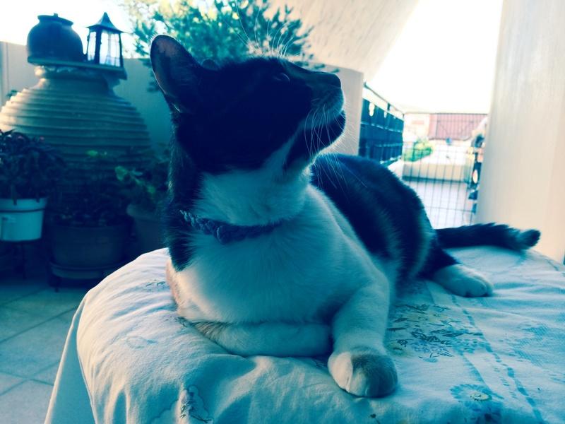 Κάρι, μια υπέροχη γατούλα και τα 4 μωράκια της - Σελίδα 9 16_milou_profil