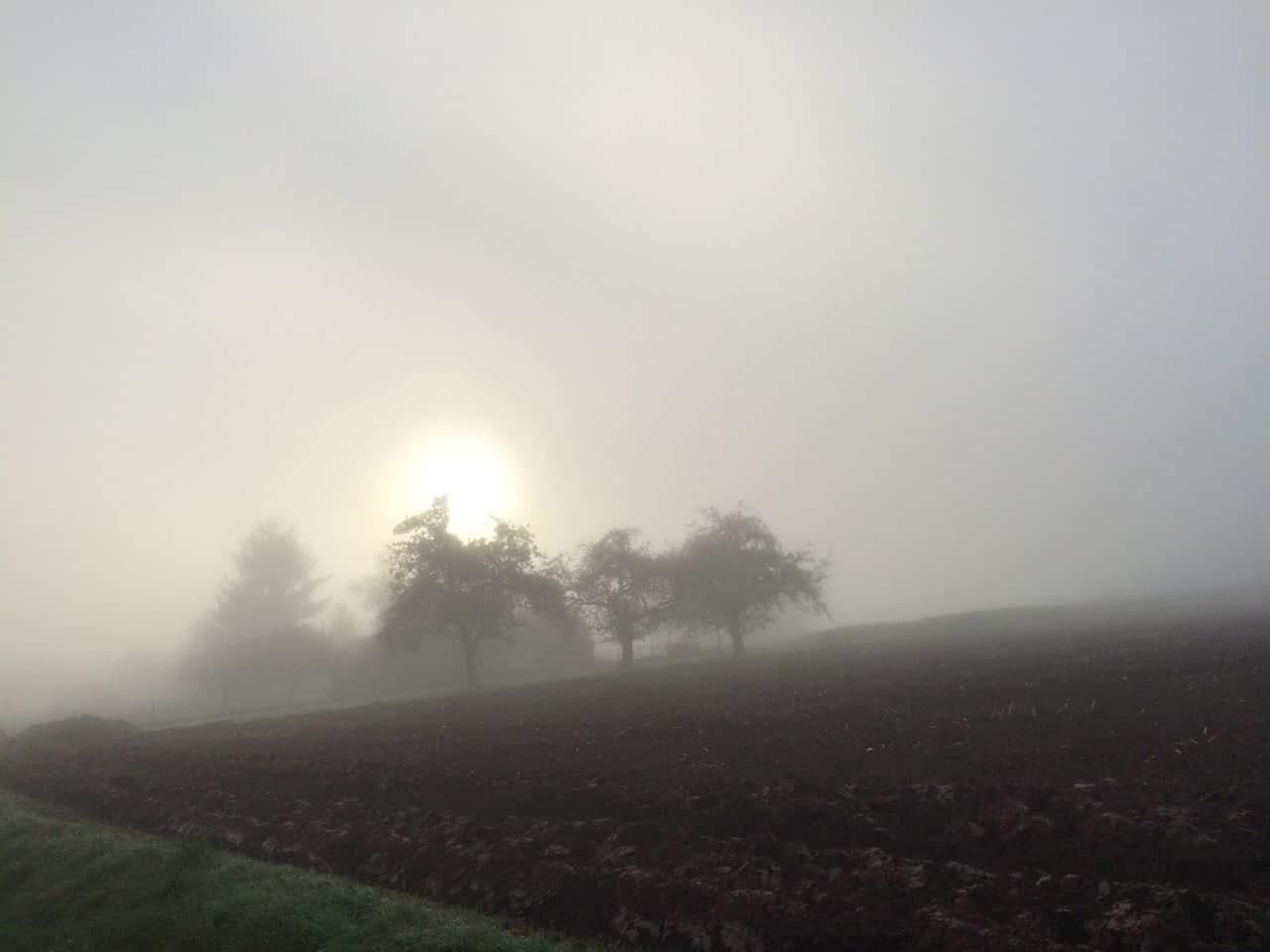 ein Herbstmorgen IMG_3299