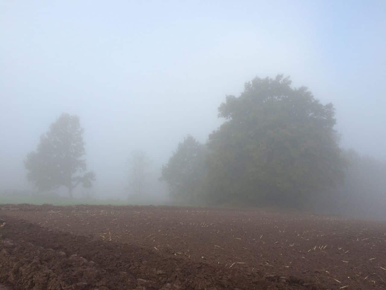 ein Herbstmorgen IMG_3291
