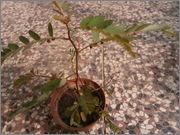 Určení druhu rostliny - Stránka 3 P9071645