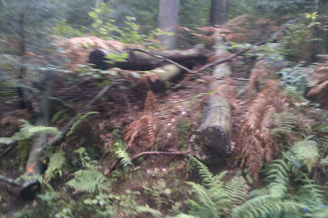 Listopadne šume IMAG1113