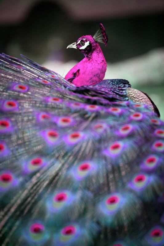 Razne ptice - Page 7 Tumblr_mlztdwrwl_V1rn63izo1_500