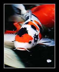 Aquariofilia ligado a educação de Jovens do Ensino Fundamental e Médio. Images5_KAZPGBF