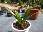 Určení druhu rostliny - Stránka 4 P1010064