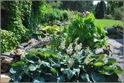 Léto na zahradě DSC_0125