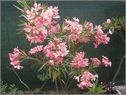 Léto na zahradě P6251335