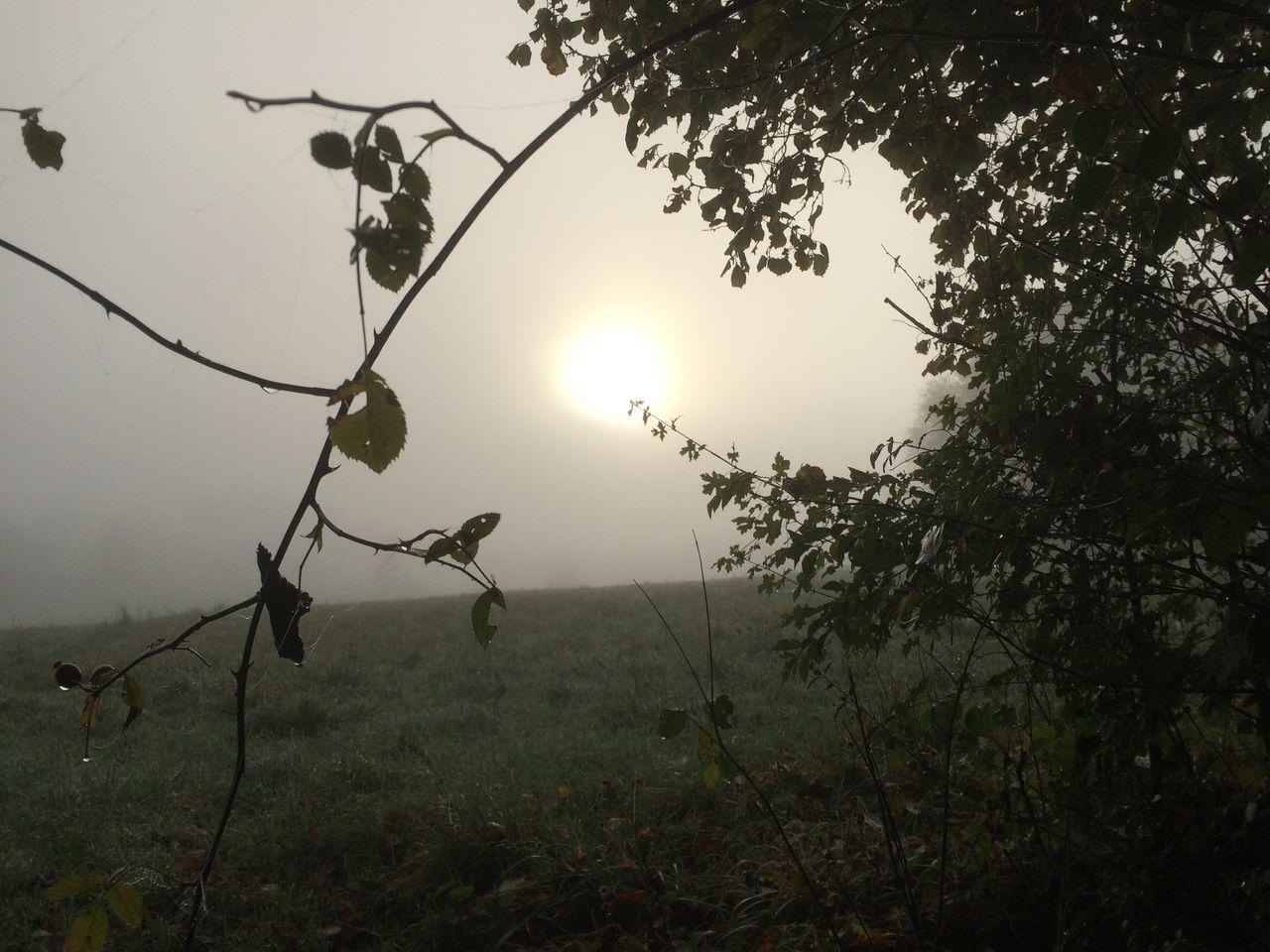 ein Herbstmorgen IMG_3300