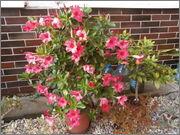 Léto na zahradě P7111401