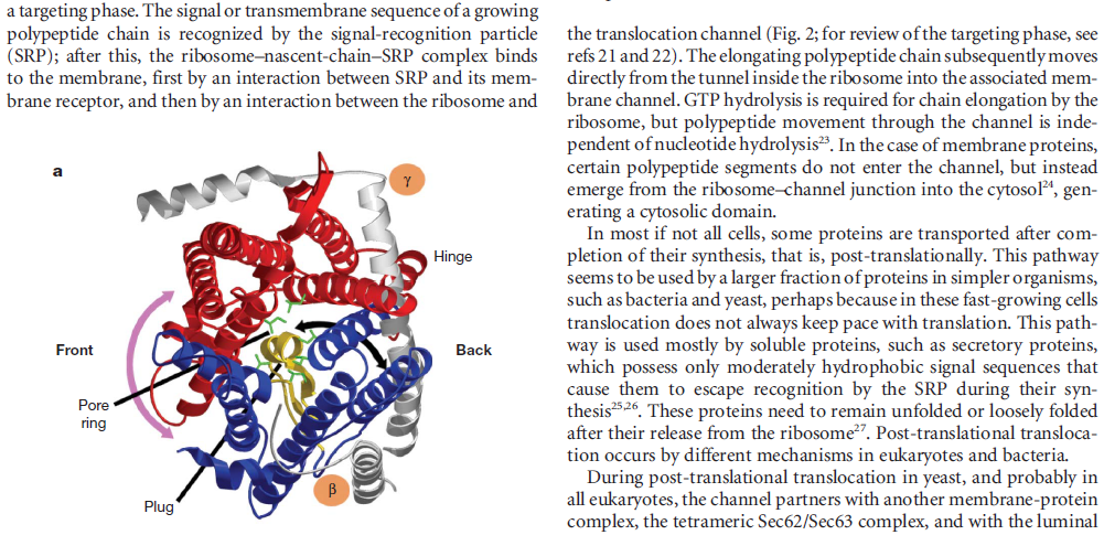 Bacterial Secretion Systems Translocon_123