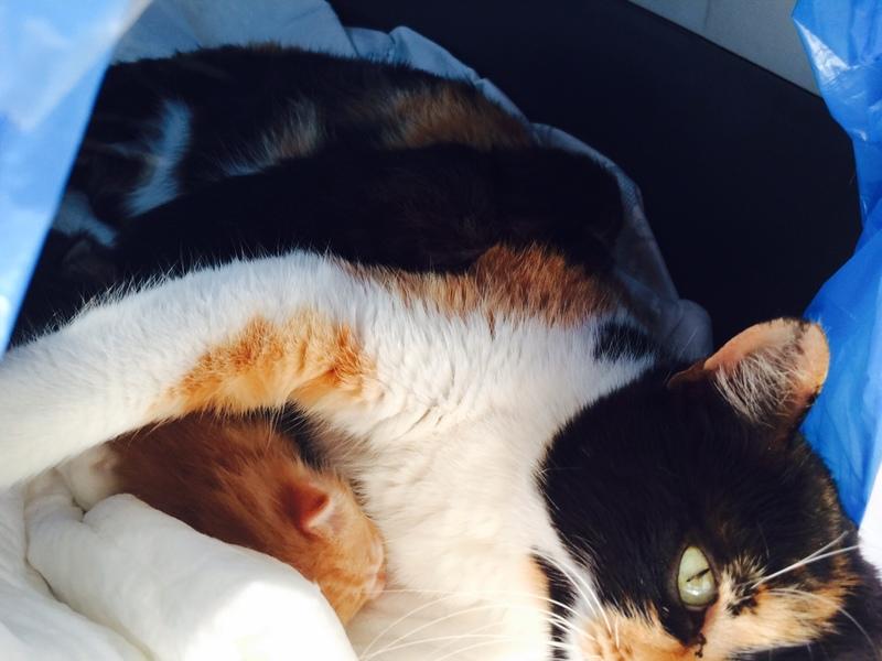Κάρι, μια υπέροχη γατούλα και τα 4 μωράκια της - Σελίδα 2 Image