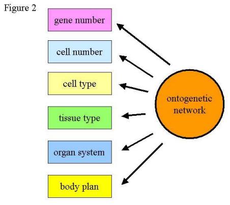 Understanding Ontogenetic Depth: Naming Versus Measuring Pn12