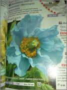 Скрапбукинг. Голубой мак, карандашница или декорваза для сухоцветов. DSCF1913