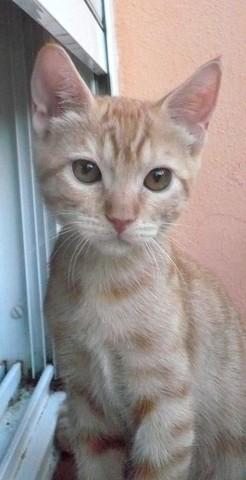 MERMELADA gatita naranja 2 meses URGE adopción-Córdoba Mermi