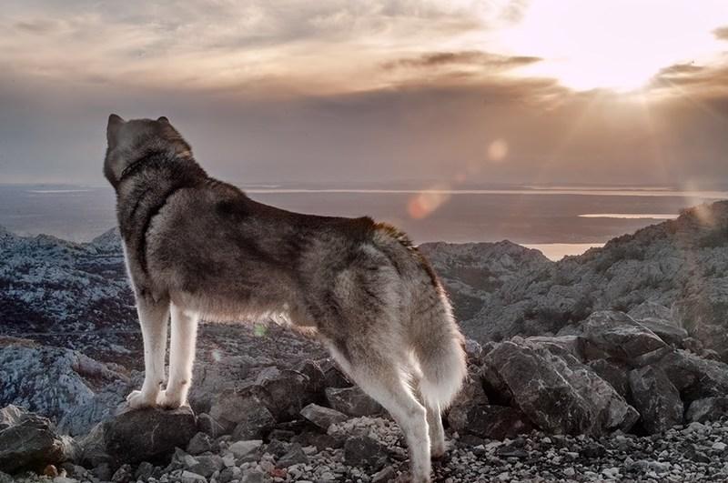 Psi kao vjerni pratitelji - Page 20 2013_11_25_11_18_31