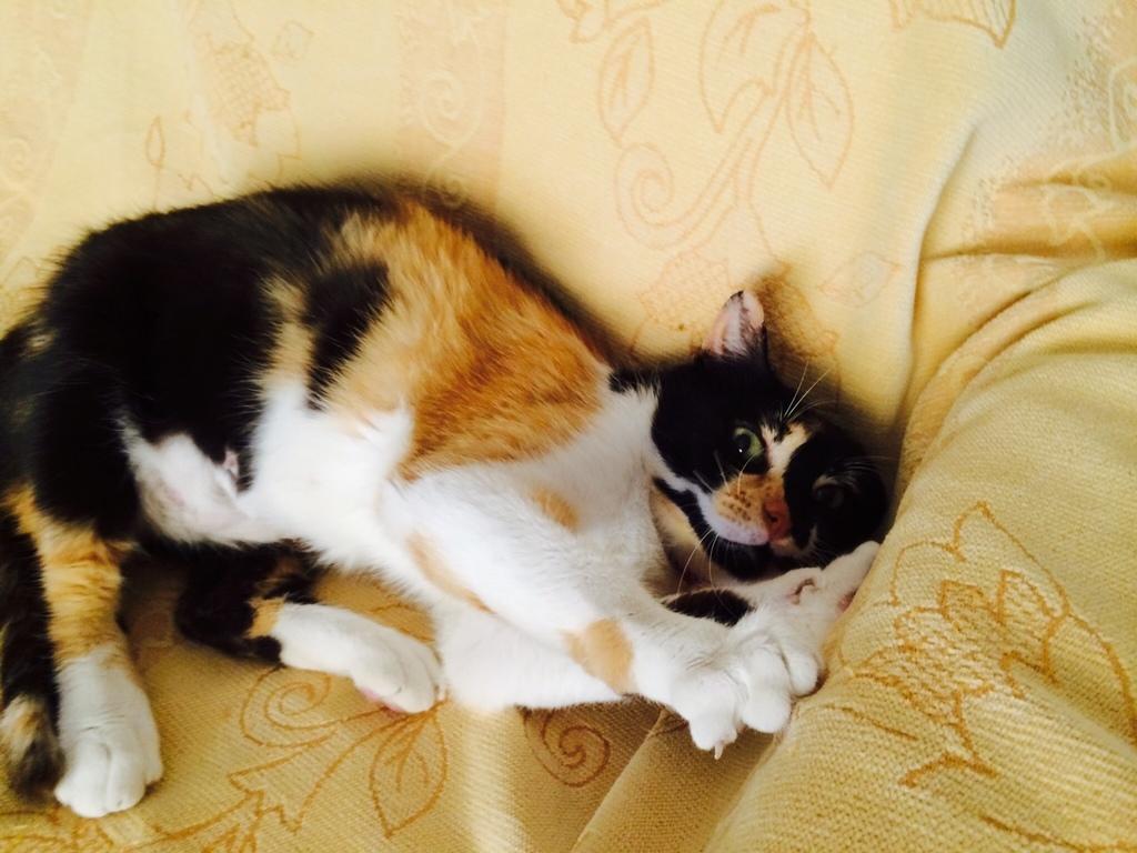 Κάρι, μια υπέροχη γατούλα και τα 4 μωράκια της - Σελίδα 5 Milou_nazia