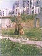 SPLIT 'Dalmatinskih brigada' Visoka 1986/1987 - Page 2 Siro_vp_pas_001