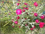 Určení druhu rostliny - Stránka 3 P7060185