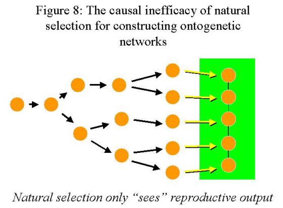 Understanding Ontogenetic Depth: Naming Versus Measuring Pn12345678